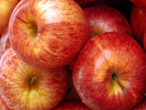 Massachusetts businesses stay ahead of food waste ban - GreenBiz.com (blog) | Food and Agriculture | Scoop.it