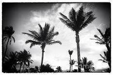 Common Core Florida: Orwellian Lessons | Restore America | Scoop.it