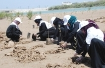 Focus on mangrove cultivation - Oman Daily Observer | Inter-tidal Wetlands | Scoop.it