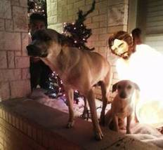 Away in a Pleasant Grove manger, 2 dogs found a bed - Dallas Morning News | Dogs, Rescue dogs, animal welfare, pet adoption, pet toys, pet food | Scoop.it