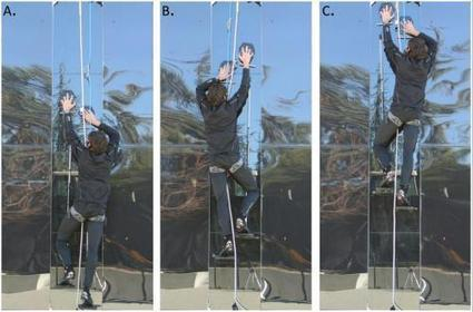 Gecko inspired pads allow researchers to climb glass wall | Innovations in the Market | Scoop.it