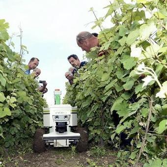 Le robot Naïo bientôt dans les vignes pour réduire les produits phyto ? | Le Vin et + encore | Scoop.it