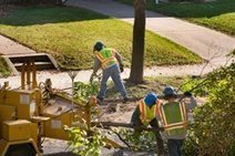 best tree removal queens ny | Emergency Trees Removal | Scoop.it