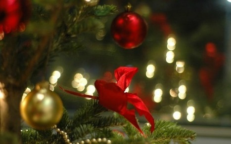 12 Tree Tips of Christmas: A Christmas Tree Shopping Guide | The Jett Journal | Scoop.it
