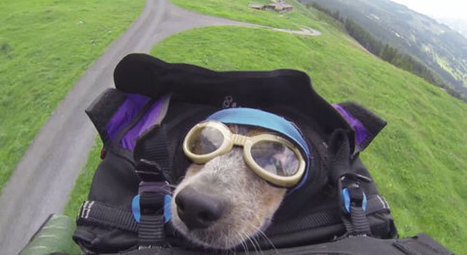 Incredible: National Geographic Introduces You to Whisper, the BASE Jumping Dog | THE WORLD AROUND US ODD & INTERESTING STORIES | Scoop.it