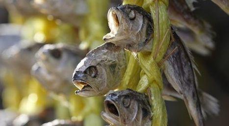 Les poissons, espèces en voie de disparition totale   manually by oAnth - from its scoop.it contacts   Scoop.it