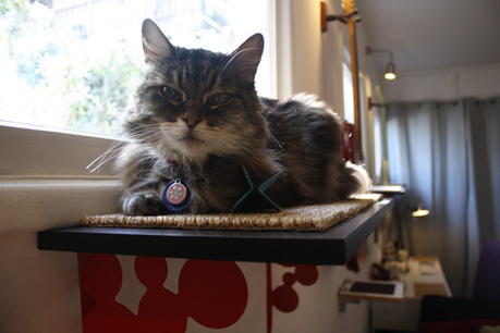 Catification: Jackson's Own Home | Cats and Music | Scoop.it