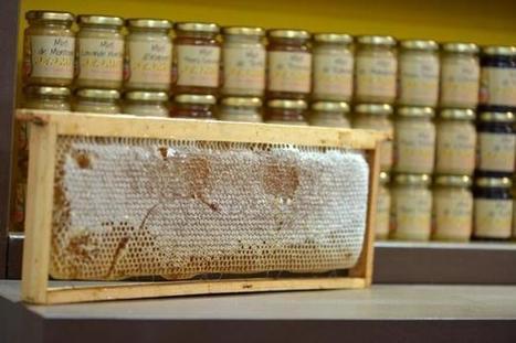 Alimentation: 10% du miel commercialisé en France est frauduleux   ActuWiki   Alim attention   Scoop.it