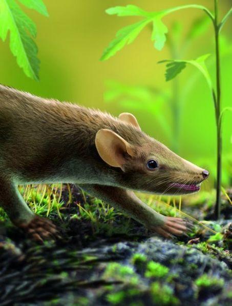 Un mammifère à épines vieux de 127millions d'années découvert en Espagne | Ecology view | Scoop.it