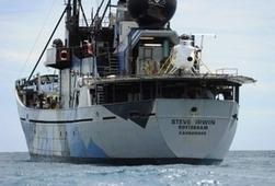Nouvelle attaque d'écologistes contre la flotte baleinière nippone | écolo | Scoop.it