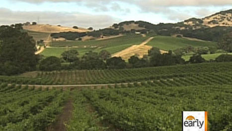 Climate change to radically alter vineyard map? | Yr 12. Geography: a study of viticulture | Scoop.it