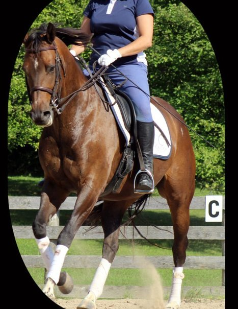 Two Upper-Body Secrets to Riding Success | The wonderful world of horses | Scoop.it