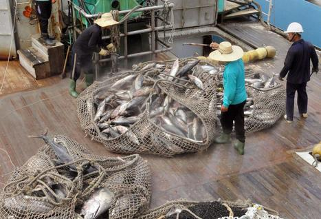 Widespread Fish Consumption Drives Fears of Empty Oceans | Seahorse Project | Scoop.it