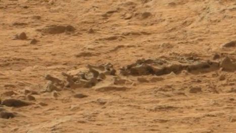El Curiosity puede haber fotografiado un esqueleto animal en Marte   Ciencia y Tecnologia Noticias   Scoop.it