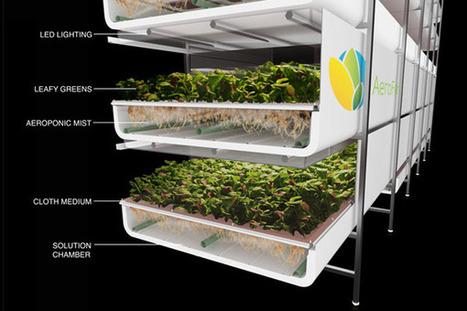 AeroFarm: cultivos sin tierra ni luz y casi sin agua. | Ecocosas | Cultivos Hidropónicos | Scoop.it