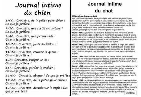 Journal intime | Histoire de chats | Scoop.it