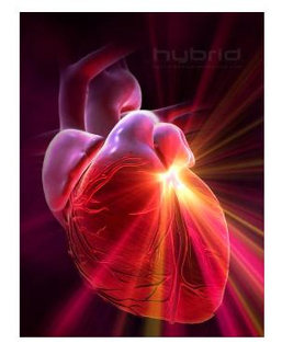 Sistema Circulatorio   Biologia Humana   Scoop.it