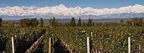 Would you pay more than US$100 for an Argentine Malbec? | Autour du vin | Scoop.it