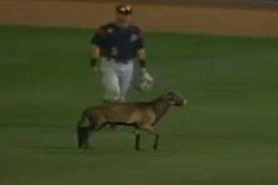 Sheep Runs Across Outfield, Interrupts Minor League Baseball Game | Public Relations & Social Media Insight | Scoop.it