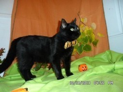 Queens Our City Radio Featured Cat For Adoption – Leo (FELV +) (Forest Hills, Queens) | Queens Our City Radio Featured Cat For Adoption | Scoop.it