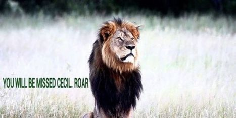 Petition: Demand Justice for #Cecil the #Lion, Killed in #Zimbabwe! #Minnesota #dentist | Messenger for mother Earth | Scoop.it