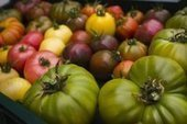 Organic tomato farmer sees fruits of work - The Columbian | The greenhouse | Scoop.it