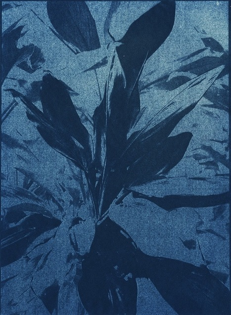 Douglas Mandry Made These Cyanotypes with a Solarium Machine | What's new in Visual Communication? | Scoop.it
