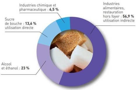 Les chiffres-clés de la filière betterave-canne-sucre. | agro-media.fr | Actualité de l'Industrie Agroalimentaire | agro-media.fr | Scoop.it