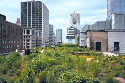 La préservation de la biodiversité urbaine se traduit par de nombreux effets bénéfiques pour les citadins | Horticulture urbaine et périurbaine | Scoop.it