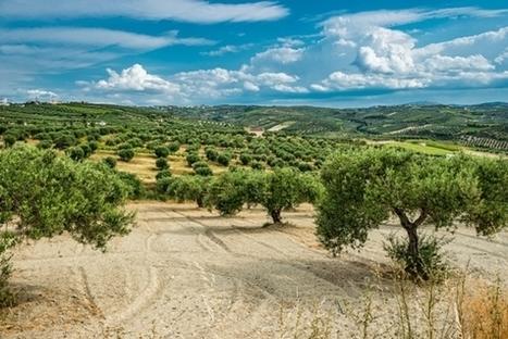 Φθινόπωρο στην Κρήτη | travelling 2 Greece | Scoop.it