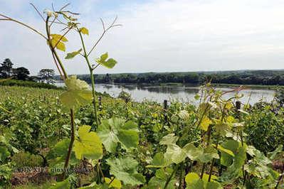 Chenin Blanc, the Loire Valley's most versatile grape | Wine | Scoop.it
