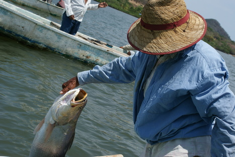 When Poverty and Marine Conservation Are Linked, Start a Responsible Fishing Movement | Aquaculture Directory | Scoop.it