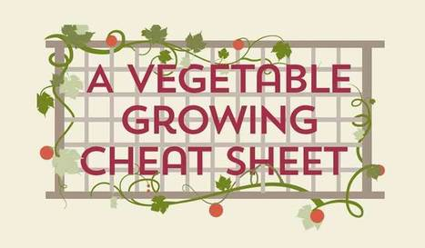 A Vegetable Growing Guide Infographic Cheat Sheet | Permaculture - [creatively] re-design our communities, environment and our behavior | Scoop.it