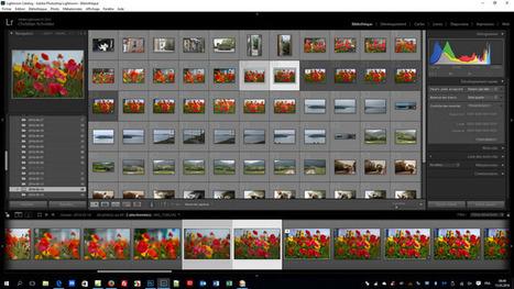 Lightroom - Comment comparer deux photos côte à côte | Chroniques libelluliennes | Scoop.it