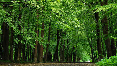 Don't Like Pollution In Your Home? Plant A Row Of Trees And Breathe Easier By Half | Air Pollution Effects | Scoop.it