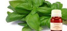 Huile essentielle de basilic | Huiles essentielles et remèdes naturels | Scoop.it