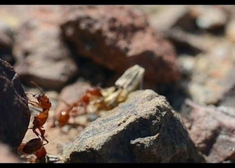 Not All Ants Are Hard Workers: Scientists Find 'Lazy' Ants In Ant Nest | Tech Times | CALS in the News | Scoop.it