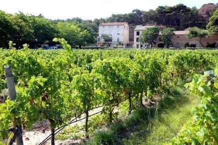Gruissan : la mémoire de la vigne sera cultivée à Pech Rouge - L'indépendant.fr | Winemak-in | Scoop.it