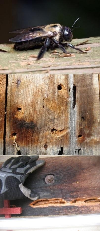 Homemade Wood Bees Killer Spray | Backyard Gardening | Scoop.it