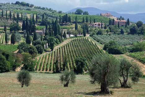 Not your typical Brunello | Vino in Love | Scoop.it