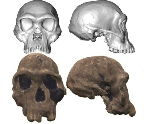 "Complete Homo habilis skull ""discovered"" 