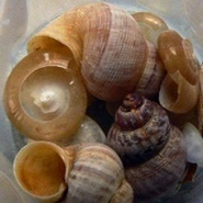 Snails signal a humid Mediterranean - | Archaeology News | Scoop.it