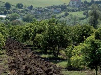 Pour la valorisation des produits forestiers - Bejaia - El Watan | Agriculture et Alimentation méditerranéenne durable | Scoop.it