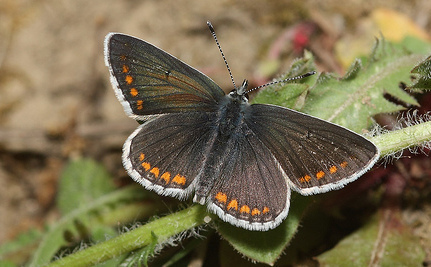 Global Warming's Unseen Effects on Plants and Butterflies | Climate change challenges | Scoop.it