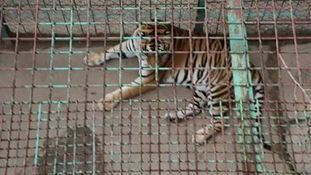 TIGER TOURISM EXPANDS IN THAILAND | Facebook | Tiger Tourism - Don't Pay to Play | Scoop.it