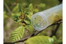 Tous les espoirs sont permis, Fruits et Légumes - Pleinchamp | Arboriculture: quoi de neuf? | Scoop.it