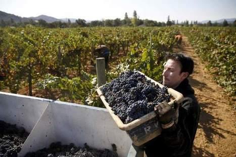 Inmates harvest grapes in Mendocino County - Santa Rosa Press Democrat | Mendocino County Living | Scoop.it