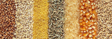 Oilseed & Grain Trade Summit to Review Industry Trends - Farm Futures | grain industry | Scoop.it
