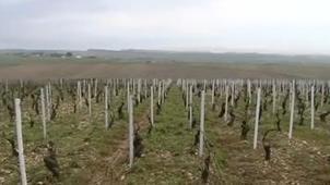 Grêle : le vignoble chablisien partiellement détruit | Le vin quotidien | Scoop.it