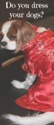 Do You Dress Your Dogs? - Two Little Cavaliers | Dog Fashion | Scoop.it
